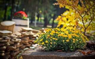 Осенние удобрения для сада и огорода: какой у них состав, инструкция по применению