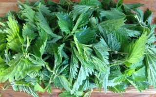 Удобрение из крапивы для подкормки растений — как приготовить, польза и вред применения