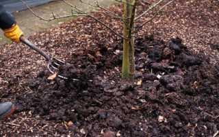 Как посадить вишню осенью — правильная посадка саженцев