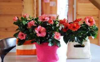 Растения для украшения комнат