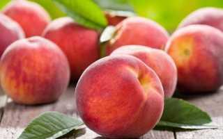 Лучшие сорта персика для Подмосковья, с описанием, характеристикой и отзывами