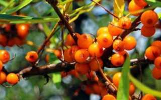 Чем удобрять сад осенью — яблоки, груши, вишню, черешню и т.д.