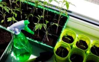 Пикировка томатов: как пикировать рассаду, прищипывать ли корень