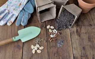 Как повысить всхожесть семян и вырастить крепкую рассаду