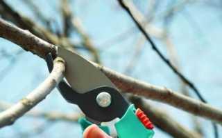 Обрезка вишни для начинающих — осенью или весной