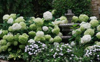 Самые популярные виды и сорта гортензий для российских садов: подборка с описаниями и фото