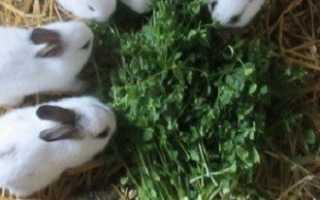 Роды крольчихи — что нужно знать начинающему кролиководу