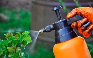 Как и чем опрыскивать осенью смородину