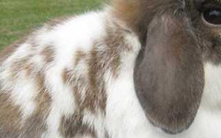 Как проходит забой кроликов на мясо и что для этого необходимо