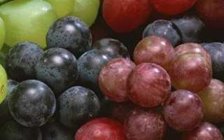 Посадка и выращивание саженцев винограда разными методами