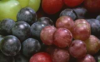 Как вырастить виноград из косточки и получить хороший урожай?