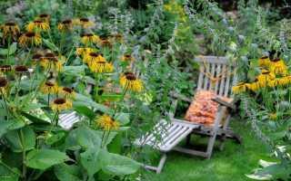 Растения в саду, которые помогут быть здоровым
