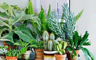 Комнатные растения, которые мы постоянно называем чужими именами