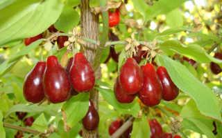 Плодово-ягодные культуры, которые неприхотливы в уходе
