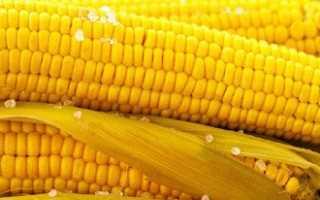 Выращивание кукурузы у себя на даче: свои особенности