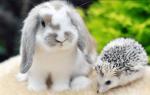 Чем можно кормить декоративного домашнего кролика