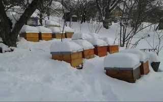 Подготовка пчел к зимовке в улье под снегом — что делать?