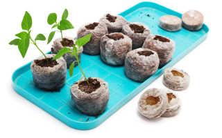 Посадка перца в торфяные таблетки, как правильно делать, а также отзывы о данном способе