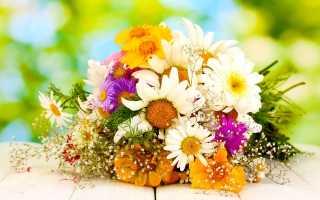 Какие летние садовые цветы любят больше: голосование с рейтингом