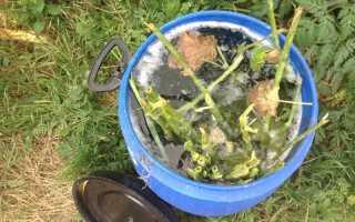 Зелёное удобрение: как приготовить подкормку из травы, в том числе крапивы, правильно её использовать, отзывы