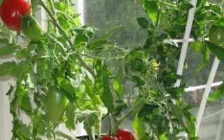 Как вырастить рассаду помидор в домашних условиях на подоконнике