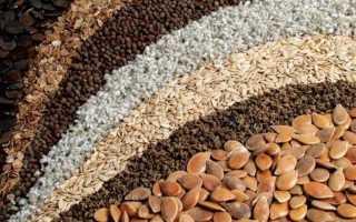 Старые семена лучше всходят, миф или правда о моркови и других культурах