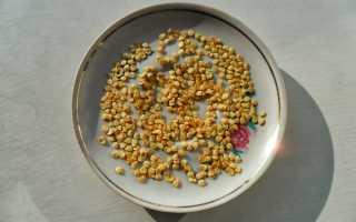 Как прорастить семена перца, в том числе описание лучших способов проведения