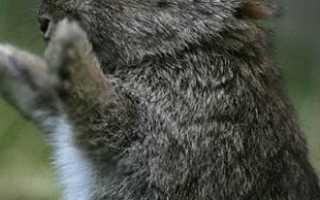 Кролиководство в домашних условиях для начинающих