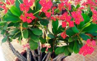 Растения для самых ленивых хозяек