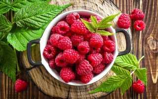 Правила весеннего ухода за малиной для получения богатого урожая летом