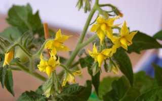 Пустоцвет на помидорах: почему появляются, что делать