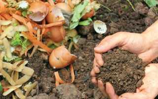 Народные удобрения для овощей: яичная скорлупа, картофельная кожура и другие