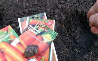 Благоприятные дни для посадки моркови в 2017 по лунному календарю