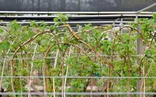 Уход за малиной весной на даче, как добиться хорошего урожая, чистка, подвязка, мульчирование после зимы, видео