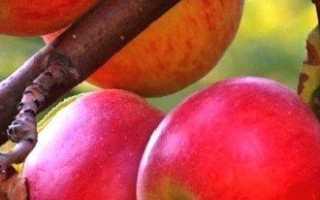 Формирование яблони, а точнее кроны и всего остального