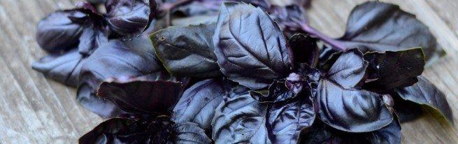 Чем полезен базилик фиолетовый и как его правильно применять