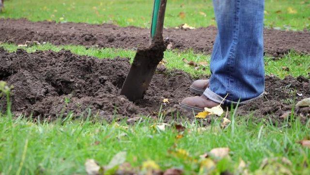 При использовании ЭМ-технологий нельзя глубоко (25-30 см, штык лопаты) перекапывать почву с оборотом пласта
