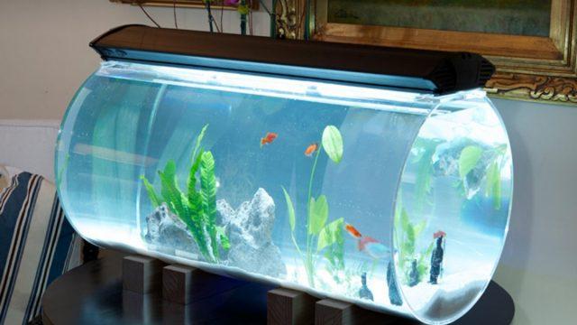 Крышка аквариума не позволит рыбкам выпрыгивать из него