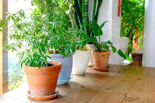К яркому солнечному свету весной растения нужно приучать постепенно