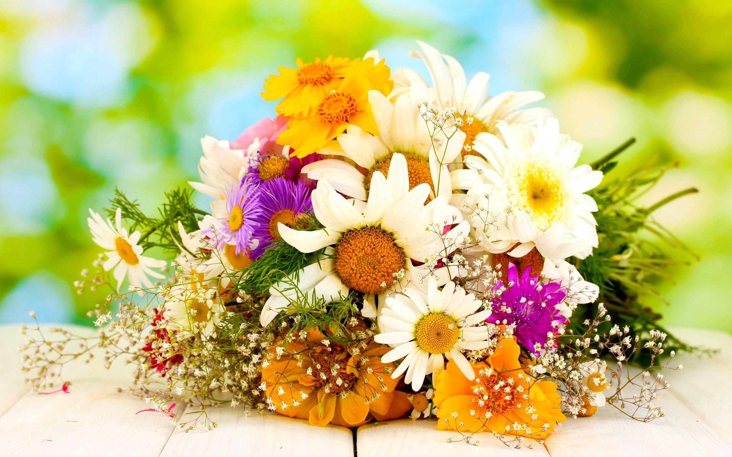 Голосование: фавориты летнего сада — какие цветы ваши любимые?