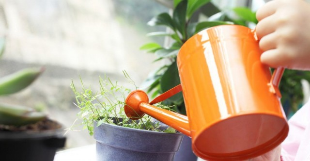 Полив грунта комнатного растения не обеспечивает влажность воздуха!