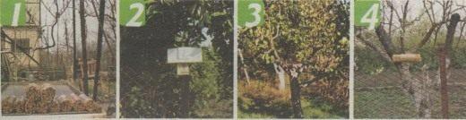 Домик для пчёл Осмии (Insect hotel used by Mason bee Osmia)