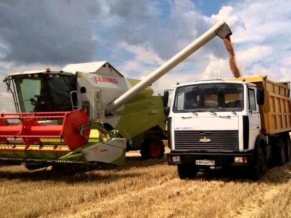 Уборка яровой пшеницы