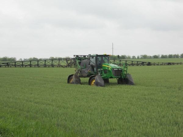 Борьба с болезнями и вредителями озимой пшеницы