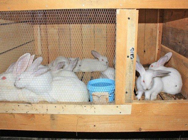 Как устроить уютное жилище для кроликов