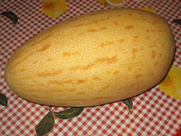 Какое оно - растение Дыня обыкновенная? фото