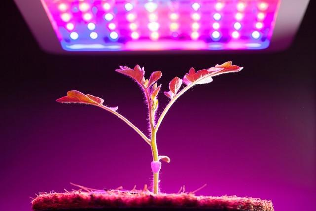 Правильная фитолампа — выбираем осветительный прибор для досветки растений