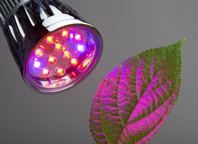 Самыми эффективными для полноценного развития растений являются показатели 660 нм (видимый человеком как красный свет) и 455 нм (синий)