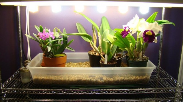 Для растений важно не только количество света, но и качество