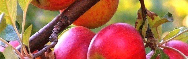 Формирование кроны яблони – основные и наиболее распространенные формы крон